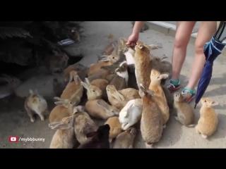 Окуносима — кроличий остров в Японии