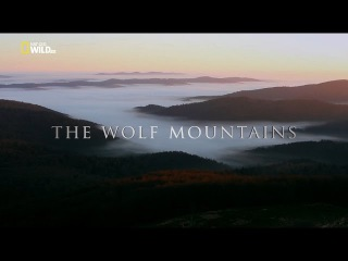 Nat Geo WILD [1080i] (ENG) The Wolf Mountains (Nature Documentary)