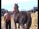 Лошади цыганского барона-2
