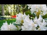 Ричард Клайдерман - Цветы, Цветы, Цветы (классическая музыка)