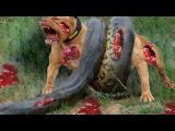 Giant Anaconda vs pitbull,Giant anaconda vs Dog,Giant anaconda Attack dog - Animal Attacks – Rachel