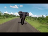 Elephant Chase Tourists Open Safari Vehicle for Miles ! Kruger National Park.