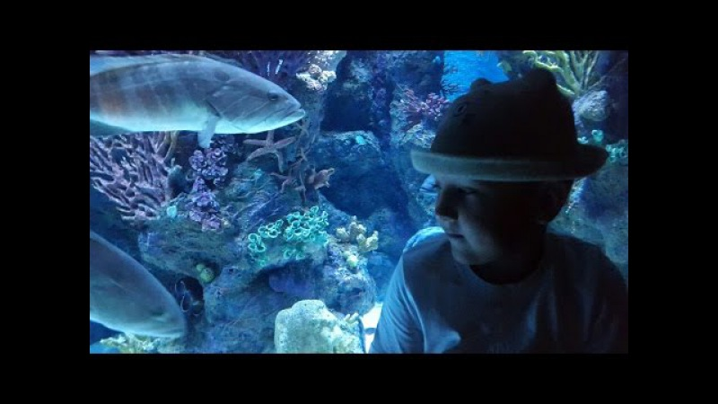 ВЛОГ ОКЕАНАРИУМ АНТАЛИЯ АКУЛЫ. Vlog OCEANARIUM ANTALYA SHARKS