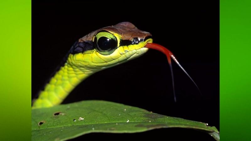 Kрасивые змеи