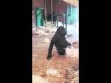 Горилла танцует вальс/gorilla dancing waltz