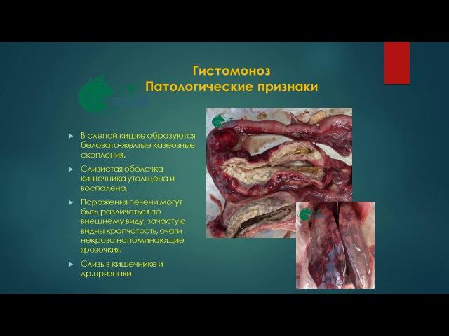 Гистомоноз