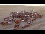 400 лошадей в кадре! ЗАО Степное, Курганская область Половинное CompactTV