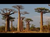 Мир Приключений - Аллея Баобабов. Лучший отдых на Мадагаскаре. Baobab alley. Madagascar.