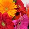 ЦВЕТОЧНАЯ КНИГА - кладезь цветочных идей.