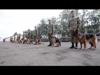 Службові собаки склали присягу на вірність в кінологічному центрі