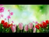Поздравляю с 8 Марта! Музыкальная видео открытка