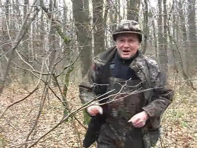 Охота на кабана с лайками в охотхозяйстве Ракитное