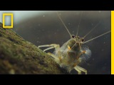 Thanks to Shrimp, These Waters Stay Fresh and Clean  Short Film Showcase