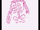 Z-toon skeleton