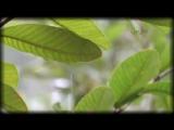 Yakuro - Memories Of Pandora