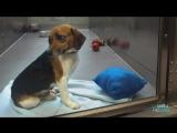 Если это видео о собаке из приюта не трогает вас, то проверьте свой пульс!