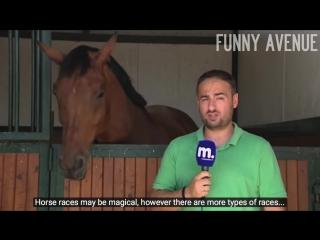 Horse interrupts reporter news blooper