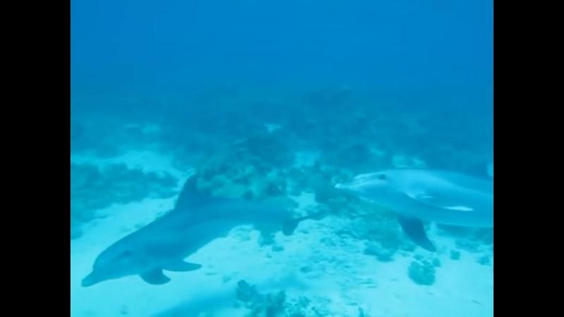 Дельфины и Люди ...