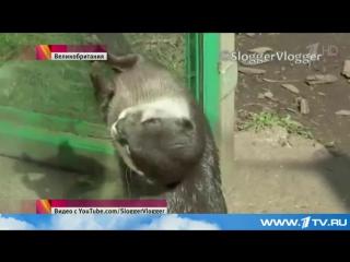 Выдра, обитающая в одном из зоопарков Бирмингема, стала звездой