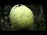 YouTube          Sao Tome and Principe two beautiful island
