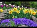 Весенние цветы Первоцветы на даче