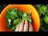 Зелень для смузи Дикоросы в зеленый коктейль Дневник здоровья Светы Гончаровой