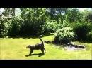Досуг кошек и собак Смешное видео про животных