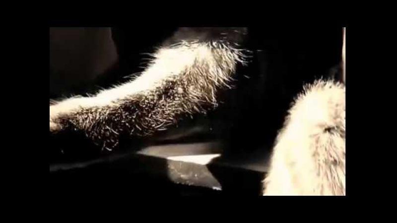 Хатніх тваринок змушують слухати промови Порошенка на 5му каналі