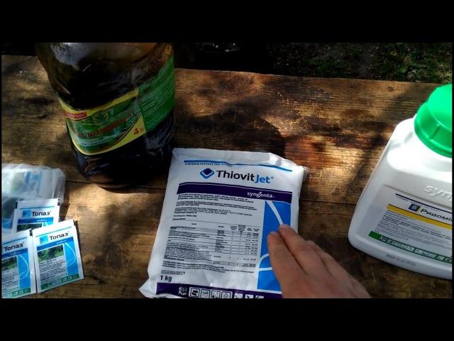 Ранняя профилактическая обработка виноградника от оидиума и паутинного клеща