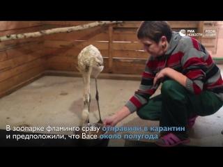 Приключения фламинго Васи в Сибири