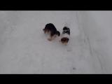 Боня и Маруся!видеоотчет