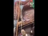 Российские рыбаки глубоко потрясены неожиданным уловом
