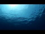 Sea Beach Aqua Park Resort 09.04.17 شرم الشيخ