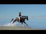 Серфинг с лошадьми