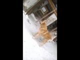 бой собак алабай город сибай №1