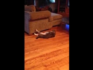 Кот качает пресс под музыку