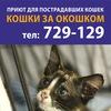 КОШКИ ЗА ОКОШКОМ | приют для пострадавших кошек