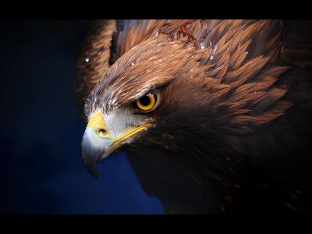 Дикий Запад Ровно в полдень National Geographic HD