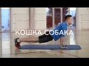 Упражнения для спины Лодочка, дельфин, кроль, собака птица, кошка собака, скорпион