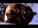 ЛУЧШИЕ ПРИКОЛЫ ПРО МОПСОВ 1 (ЛУЧШИЕ СОБАКИ) Funny Dogs only Pug Videos Pug Compilation Нарезкин TV