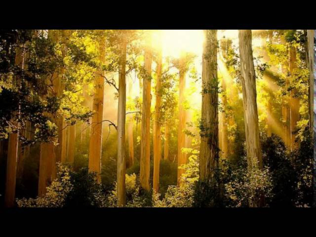 Morning Light Silhouettes - Georg Deuter
