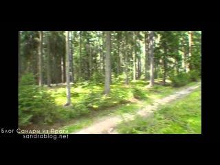 По грибы в чешский лес