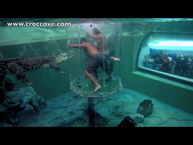 NRL Cowboys enter the Underwater Kingdom of Burt the Star of Crocodile Dundee