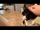 Cat has a crazy deep meow