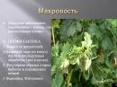 Выращивание ягодных кустарников