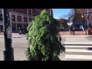 Человек-дерево в Портленде