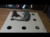 ТОП 5 Лучшие видео про котов. Смешные кошки. TOP 5 Best video funny cat.