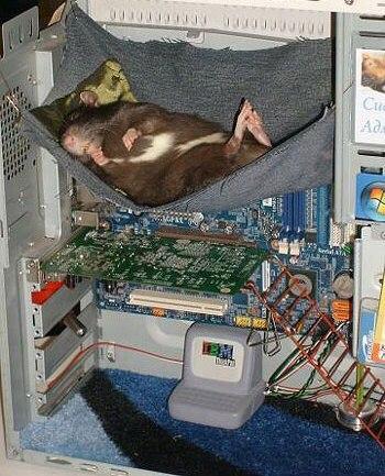 Мышь в компьютере