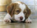 Веселая песенка для малышей: Песенка про щенка: Смешной маленький щенок