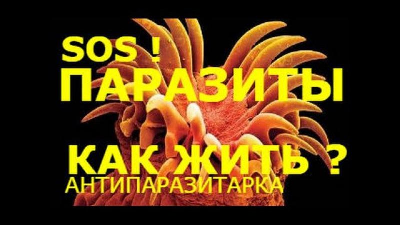 Наши болезни от паразитов! Гоните их из своего тела!